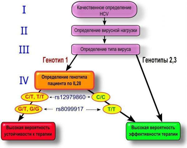 Особенности генотипов гепатита С