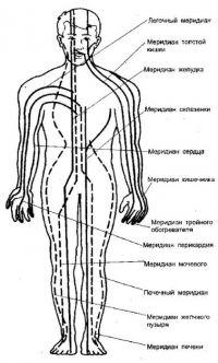 Расположение энергетических меридианов в организме