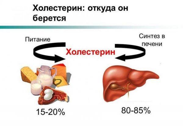 Откуда в организме берется холестерин